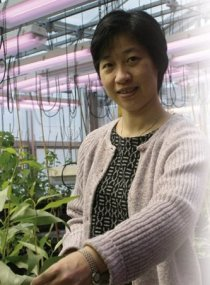 Chung-Jui Tsai has helped sequence the first tree genome and recently received a $2.1 million biotech grant.